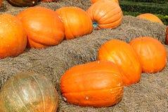 Big pumpkins Royalty Free Stock Image