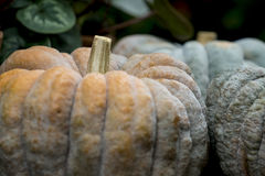 Big pumpkins on display Stock Photo