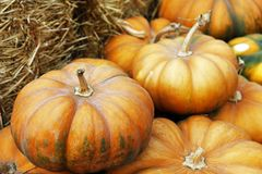 Fair of a pumpkins Royalty Free Stock Photography