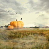 Big pumpkins in a field Royalty Free Stock Photos