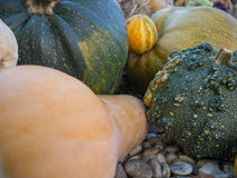 Big pumpkins in the garden. Halloween mood in the autumn garden close up Stock Photos
