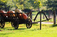 Big pumpkins on isolated old antique wooden cart wagon in bright autumn sun on a meadow of a dutch rural farm - Netherlands stock photography