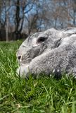 Big and rabbit on green grass Royalty Free Stock Image