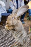 Big rabbit in the cage on the market Royalty Free Stock Image