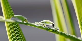 Big rain drops on leaf Stock Image