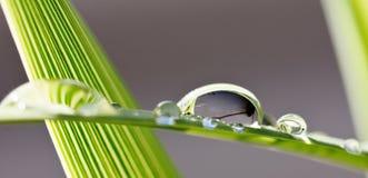 Big rain drops on leaf. Close up of big rain drops on palm leaf Royalty Free Stock Photos