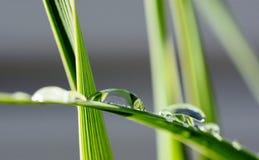 Big rain drops on leaf. Close up of big rain drops on palm leaf Royalty Free Stock Images
