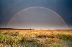 Big rainbow over bog after summer storm Royalty Free Stock Image
