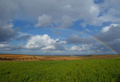 Big rainbow over fields of vines and green wheat fields Stock Image
