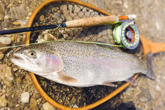 Big rainbow trout Stock Photography
