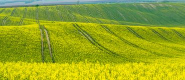 Big fields on hill. Spring agricultural landscape with big fields on hill, farmland panorama royalty free stock image