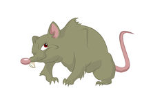 Big rat. Vector image of cartoon big scary rat Stock Images