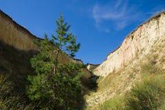 Big ravine. Green pine tree at the bottom of a deep ravine Royalty Free Stock Photos