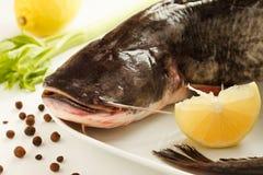 Big raw catfish royalty free stock photo