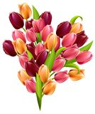 Big realistic bunch of tulips Royalty Free Stock Image