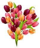 Big realistic bunch of tulips Royalty Free Stock Image
