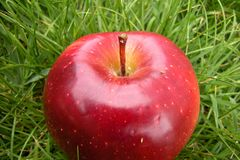Big red apple. And green grass background Stock Photo