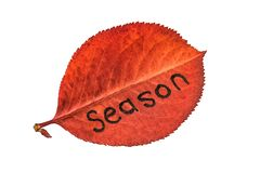 Red autumn leaf with the inscription SEASON, isolated on awhite background. Big red autumn leaf with the inscription SEASON, isolated on awhite background stock photos