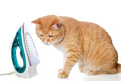 Big red cat and the iron. On white Stock Images