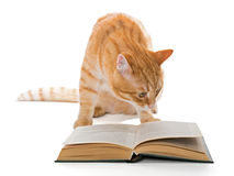Big red cat reading a book Stock Photography