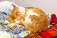 Big red cat sleeps on pile of bed linen Stock Images