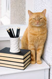 Big red cat on a white table. A stack of books, pencils and a big red cat on a white table stock images