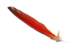 Big red feather Stock Photos