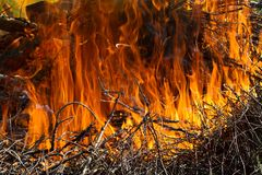 A big red fire burns on a branch Royalty Free Stock Image