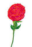 Big red flower painted watercolor vector illustration