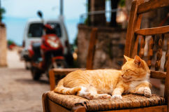 Big red ginger cat reposes outdoors on a chair Royalty Free Stock Photo