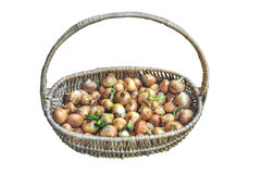 Big red and golden onions vegetables for culinary in basket. Close Royalty Free Stock Photo