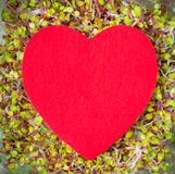 Big red heart on green sprout texture background Royalty Free Stock Image