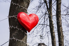 Big red heart. Hanging on the tree Royalty Free Stock Photography