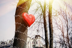 Big red heart. Hanging on the tree Royalty Free Stock Image