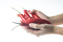 Big Red hot chili peppers on Hand , light Stock Image