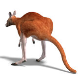 Big red kangaroo Royalty Free Stock Photo