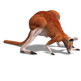 Big red kangaroo Royalty Free Stock Photography