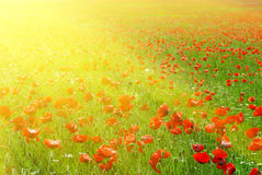 Big Red Meadow Royalty Free Stock Photos