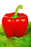 Big red pepper Royalty Free Stock Photography