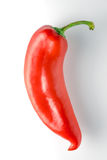 Big red pepper with a green branch on a white background Royalty Free Stock Photo