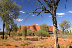 Big red rock in Australia. Fisrt sight of the big red rock mountain, Red Center, Australia, through the forest royalty free stock image