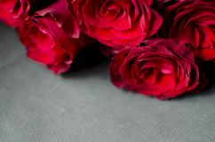 Big red rose bouquet. Nice happy birthday gift. Present from man. To a woman Royalty Free Stock Photo