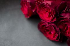 Big red rose bouquet. Nice happy birthday gift. Present from man. To a woman Royalty Free Stock Image