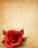 Big red rose on old paper background. Royalty Free Stock Images