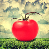 Big red tomato outdoor Royalty Free Stock Photography