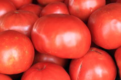 Big Red Tomatoes Royalty Free Stock Images