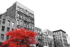 Free Big Red Tree On The Street In Front Of Black And White Buildings In New York City Royalty Free Stock Image - 132954016