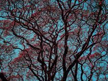 Big green trees in park. Big red trees in park in the morning royalty free stock images