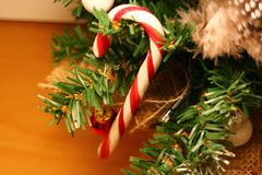 A single candy cane hanging on a branch in a miniature Christmas tree. A big red and white striped candy cane stick hangs in a miniature Christmas tree. High stock images