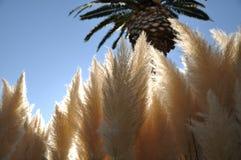 Big reed flowers Stock Photos